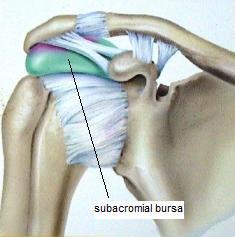 Shoulder Scan